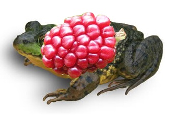 Tạo con ếch kỳ lạ Photoshop Cs6