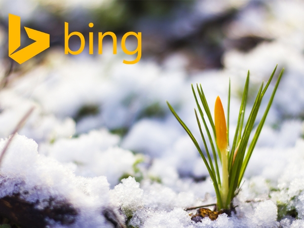 Tính năng mới trên Bing ads 2