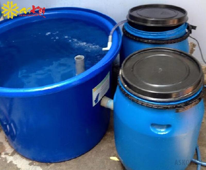 Tank nhựa nuôi cá koi hình tròn